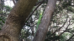 Wildlife in Pelican Bay Naples FL