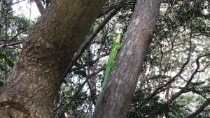 Wildlife in Pelican Bay Naples FL
