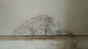 Mold problems can grow quickly if not caught in time.