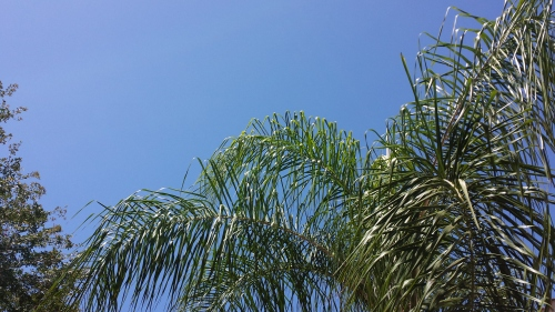 blue-skies-in-naples-fl