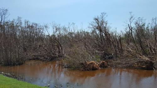 Damage to Mangroves